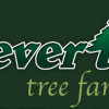 Severt's Tree Farm -picture
